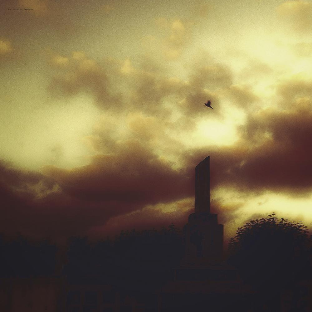 Photo in Rural #reverside #iphoneography #bird #clouds #sky #nature #cityscape #surreal #golondrina #landsacpe #rural #streetphotgraphy #icono #dark #macabre #sutil