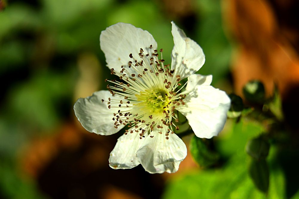 Photo in Nature #flower #nature #green #with flower