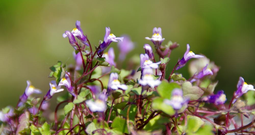 Photo in Nature #flower #spring #garden #nature