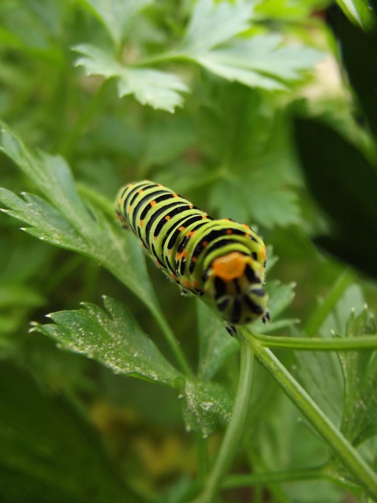 Photo in Macro #caterpillar #macro #makro #photo #green #nature #doğa #manzara #landsacep #capture #animal #çanakkale #turkey #türkiye #new