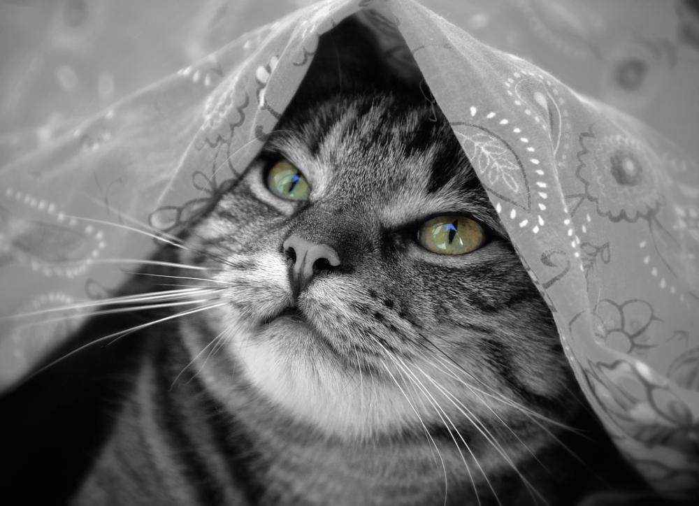 Photo in Animal #anima #cat #portrait