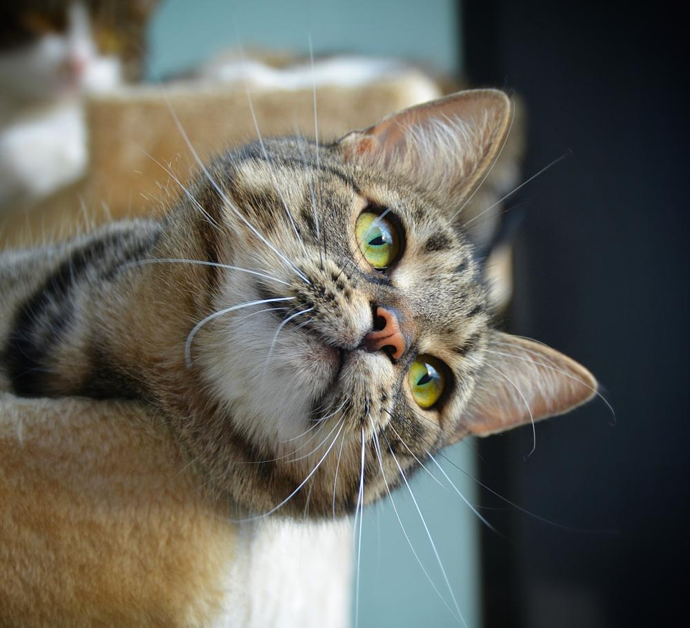Photo in Animal #animal #cat #portrait