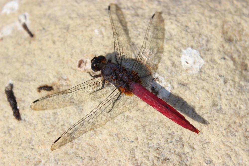 Photo in Macro #nepal #salyan #insect