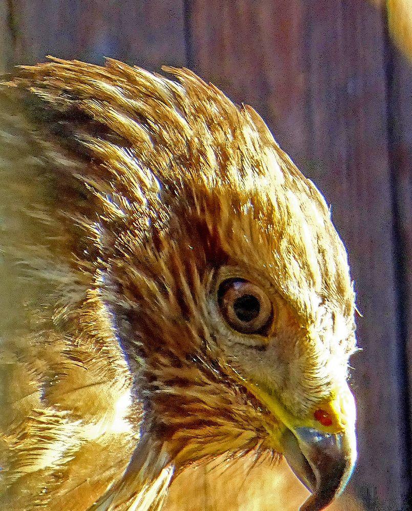 Photo in Animal #natur #tiere #vögel