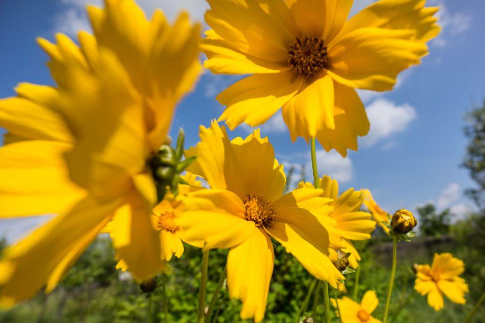 Photo in Nature #flowers #garden #summer #sky #yellow