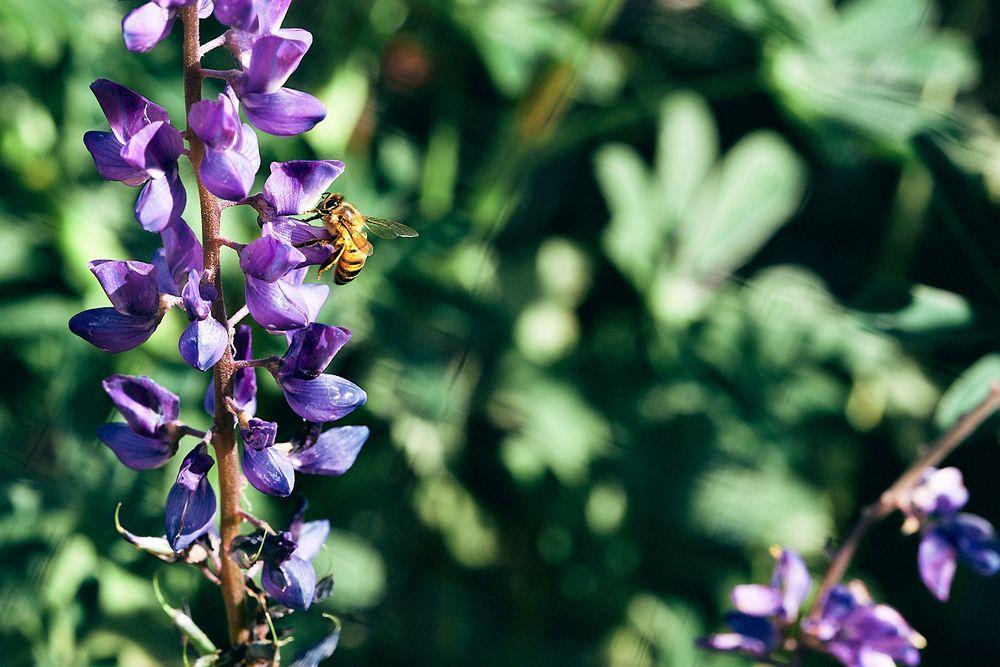 Photo in Macro #desert #desert garden #dbg #desert botanical garden #flowers #bee #spring #springtime #closeup #macro
