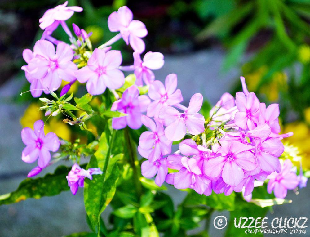 Photo in Landscape #beauty #nature #flower