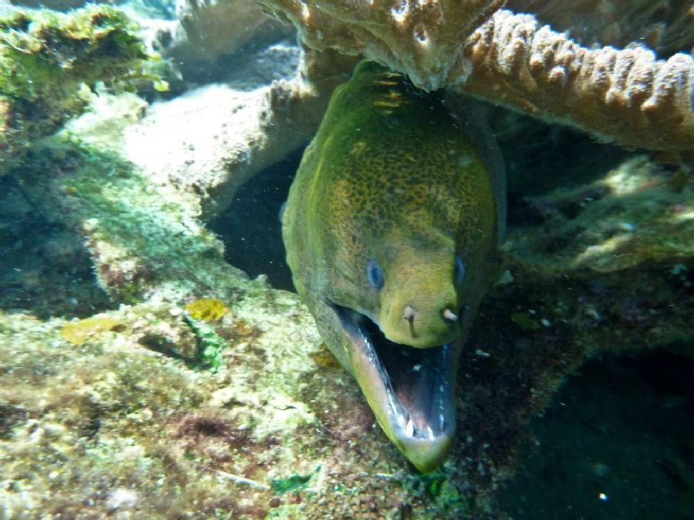 Photo in Underwater #redang #underwater #oceanlife