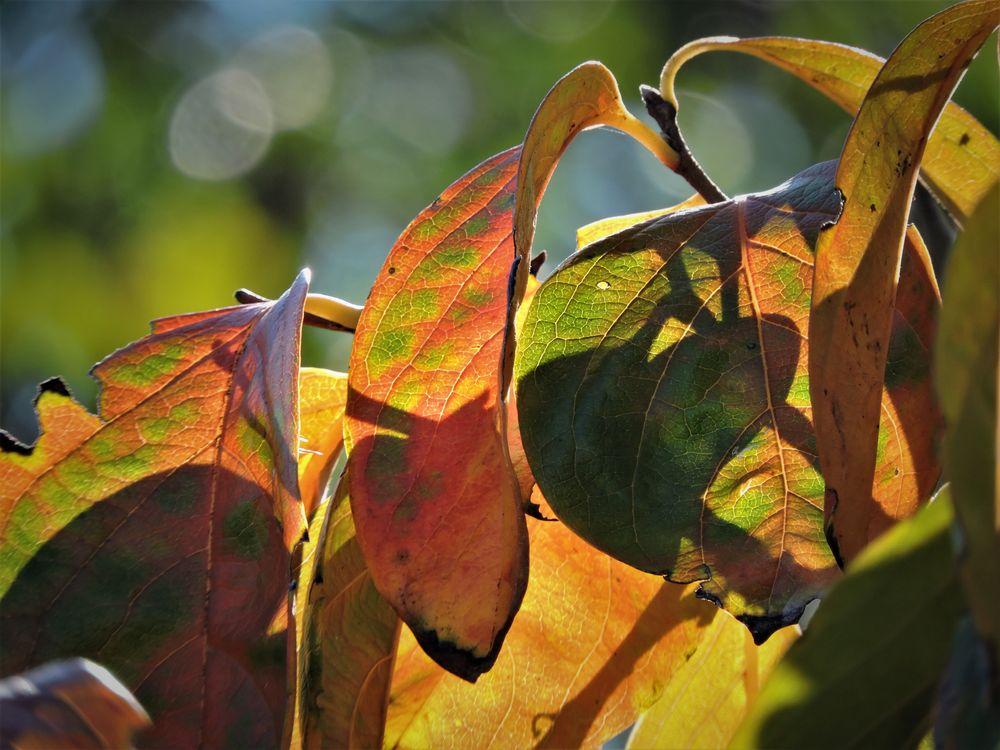 Photo in Nature #autumn #dreams #random