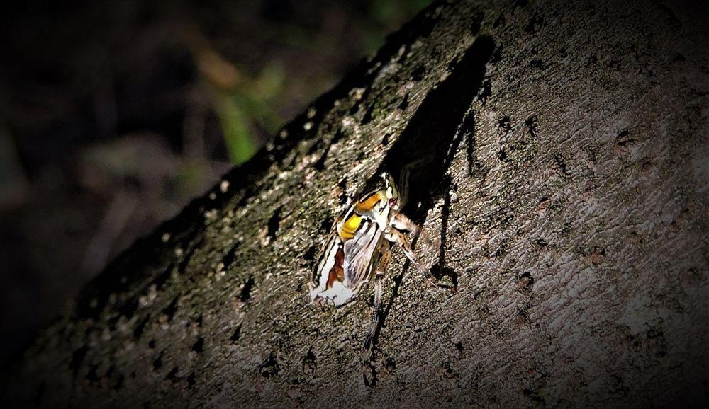 Photo in Animal #colorful #insect #big #shadow #macro #random