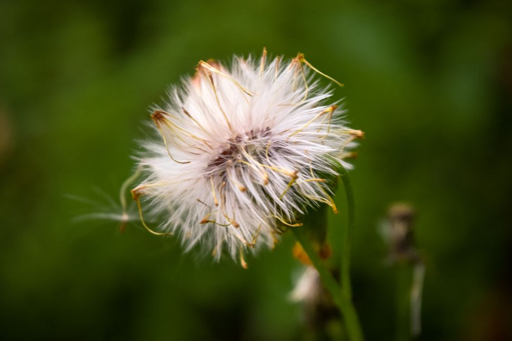 Photo in Nature #flower #nature #beaty #nice #nice flower #green #envirenment