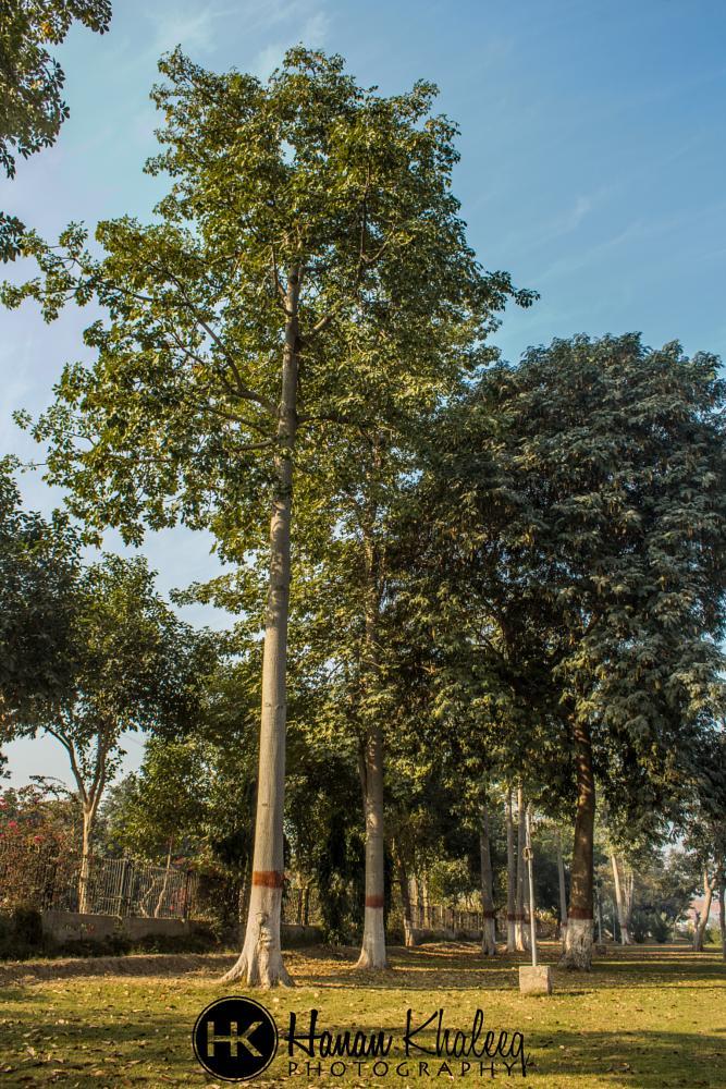 Photo in Fine Art #fineart #trees #grass #sky
