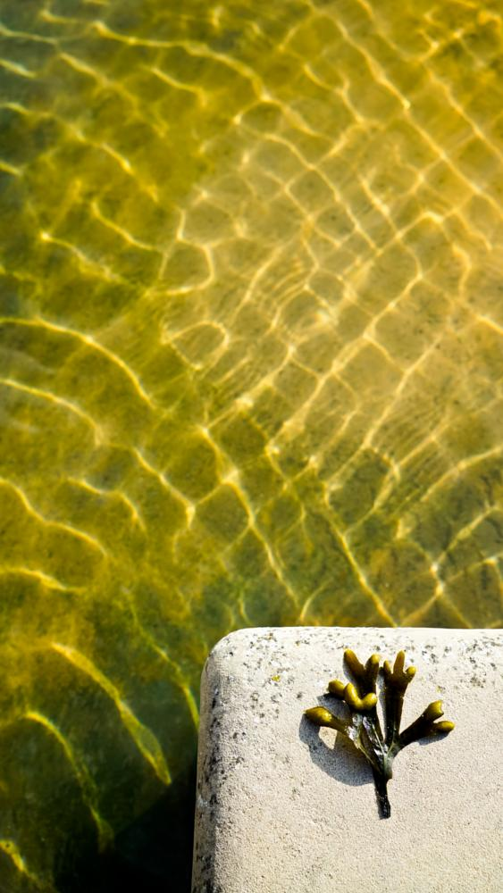 Photo in Abstract #water