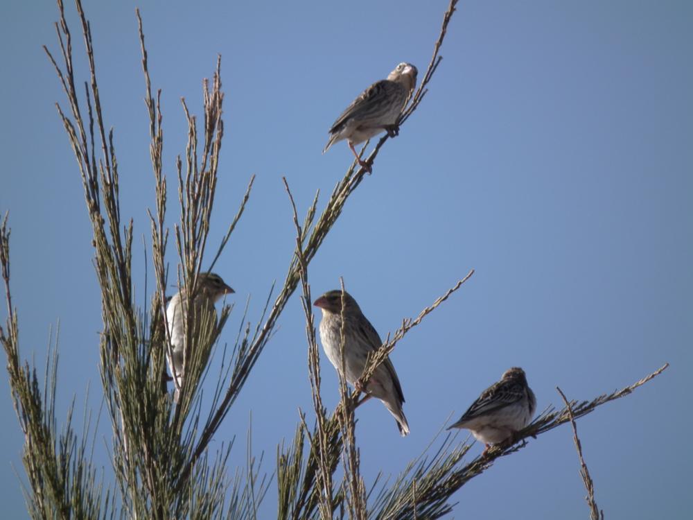 Photo in Nature #wild birds