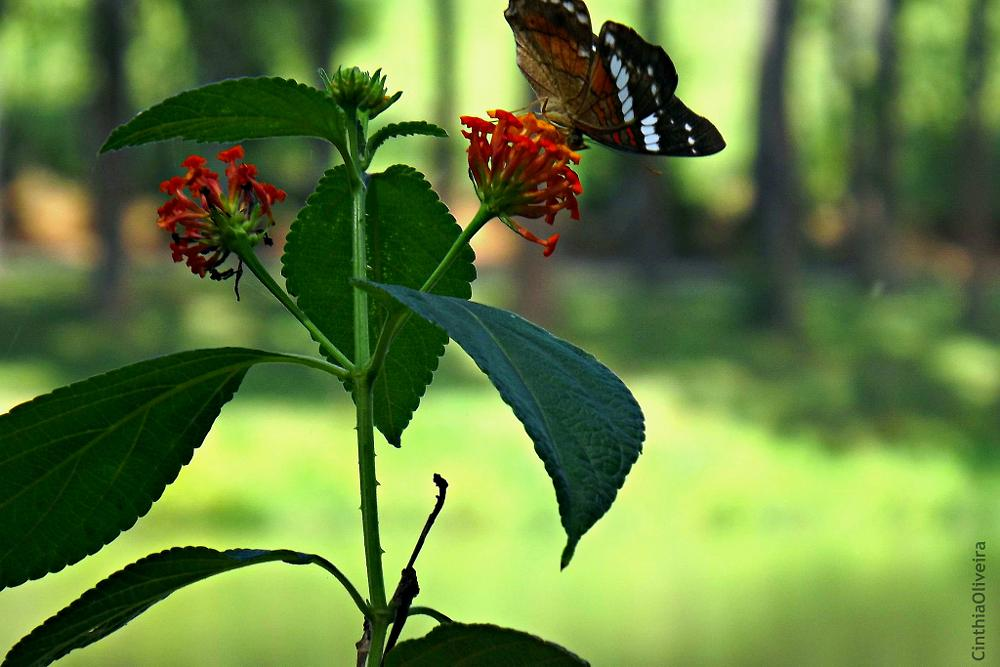 Photo in Nature #nature #flower #butterfly #mg #brasil