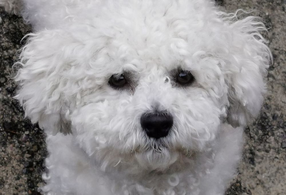Photo in Animal #dog
