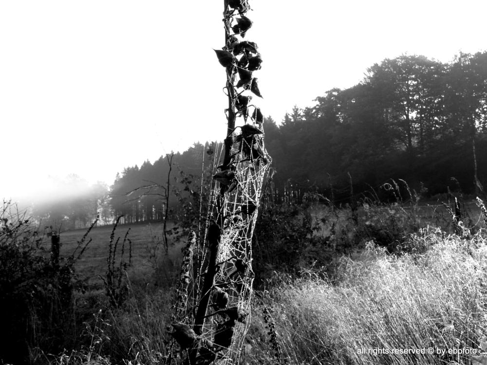 Photo in Nature #b&w #autumn #lanscape