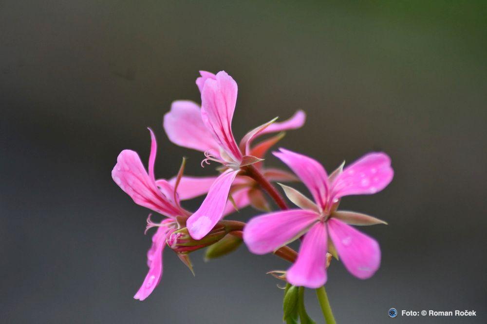 Photo in Nature #flowers #nature #nikon #olomouc region #jeseníky mountains #moravia #lázně-lipová #macro