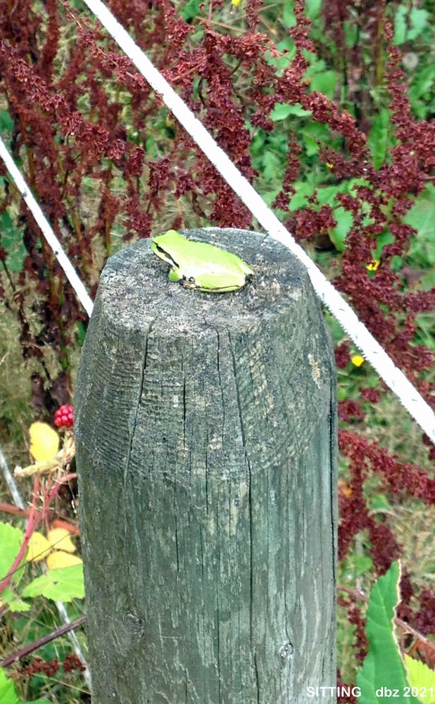 Photo in Random #frog sitting on the fence