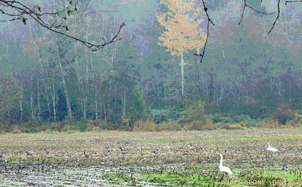 Photo in Random #cornfield perimeter