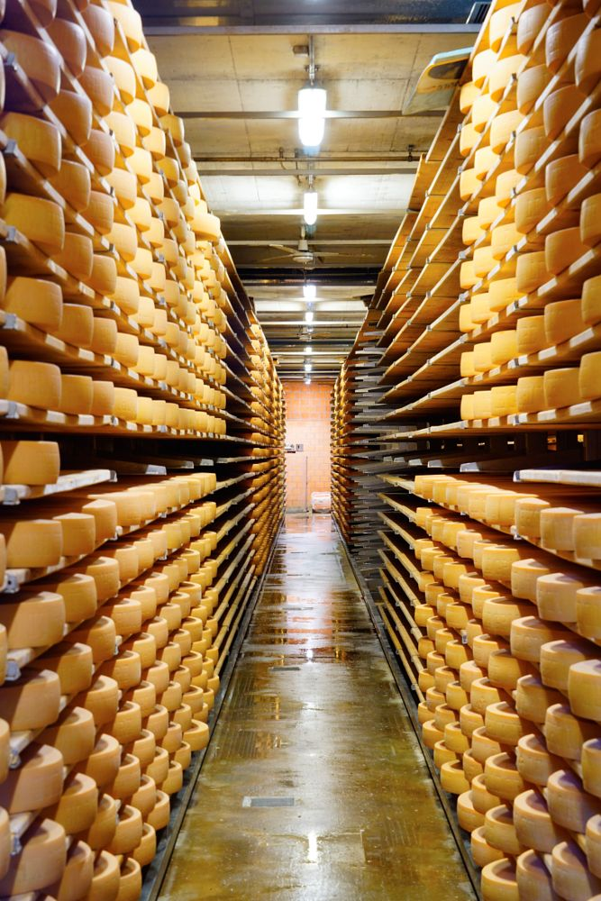 Photo in Food #swiss #cheese