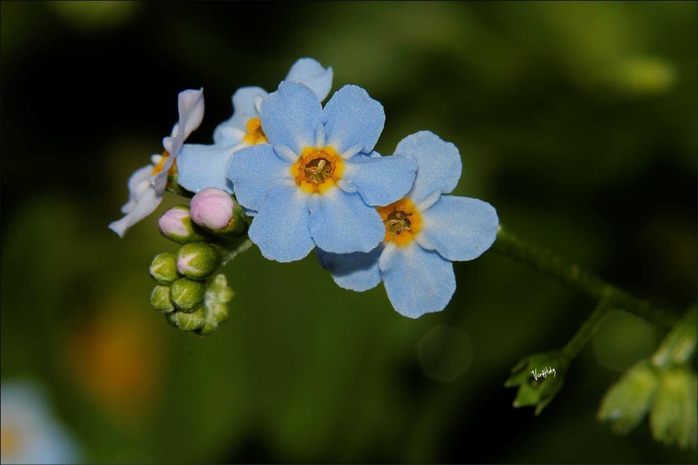 Photo in Macro #macro photography #flower #nature
