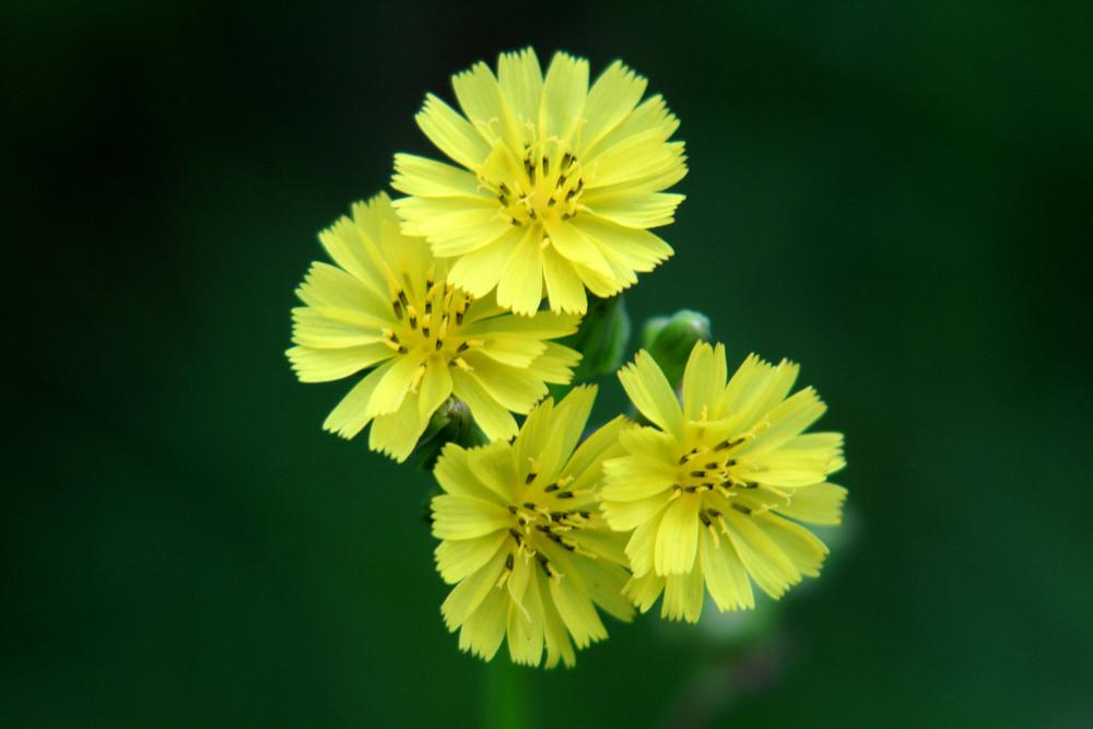 Photo in Macro #macro photography #nature up close #flower #yellow flower