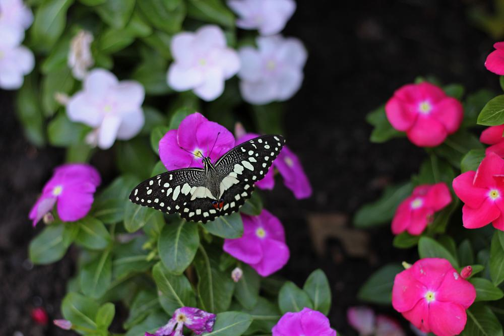 Photo in Nature #nature #flower #garden #butterfly