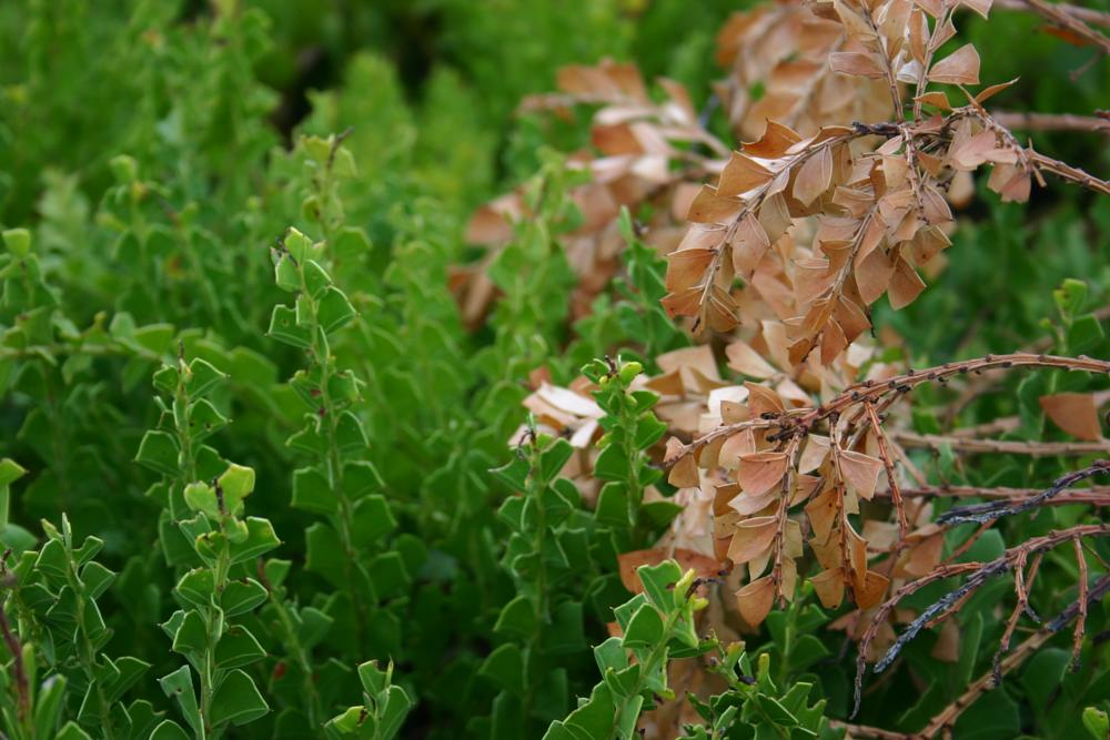 Photo in Nature #alive #brown #coastal #contrast #contrasting #dead #fortunes #green #seaside #shrubs #vegetation #flora