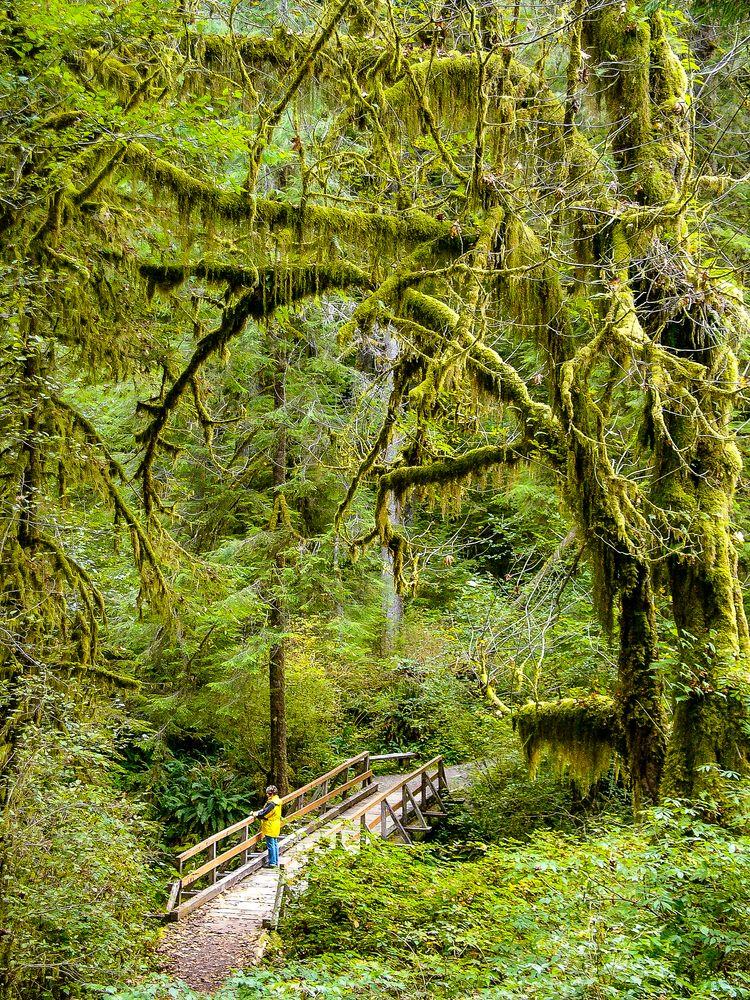 Photo in Landscape #rainforest #olimpic pi #washington state