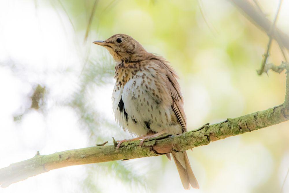 Photo in Animal #thrush #high key #bird
