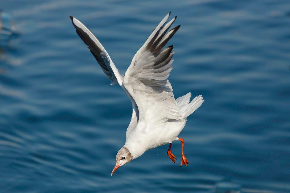 Photo in Random #aquatic bird #baby bird. #lake #seagull