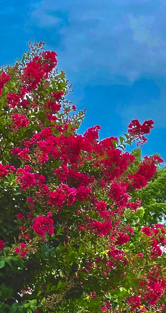 Photo in Nature #colors bush flowers
