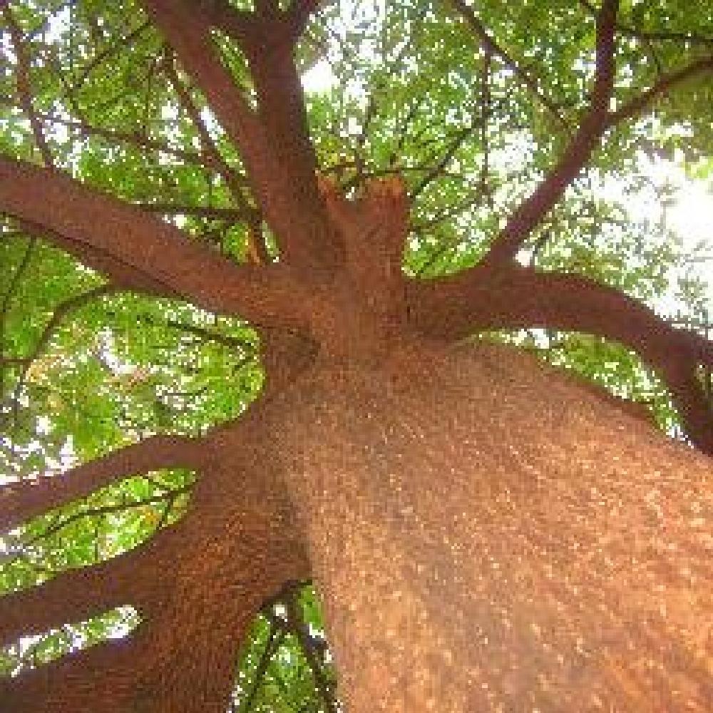 Photo in Cityscape #tree #trunk #green #eco-friendly