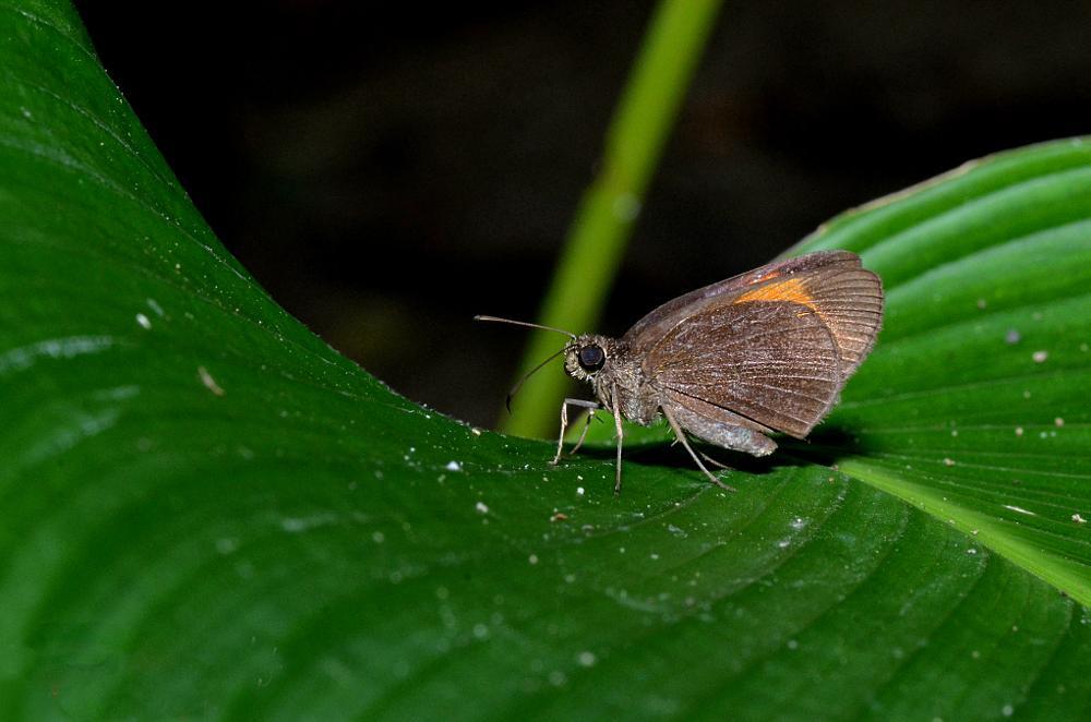 Photo in Macro #macroanimalbutterfly