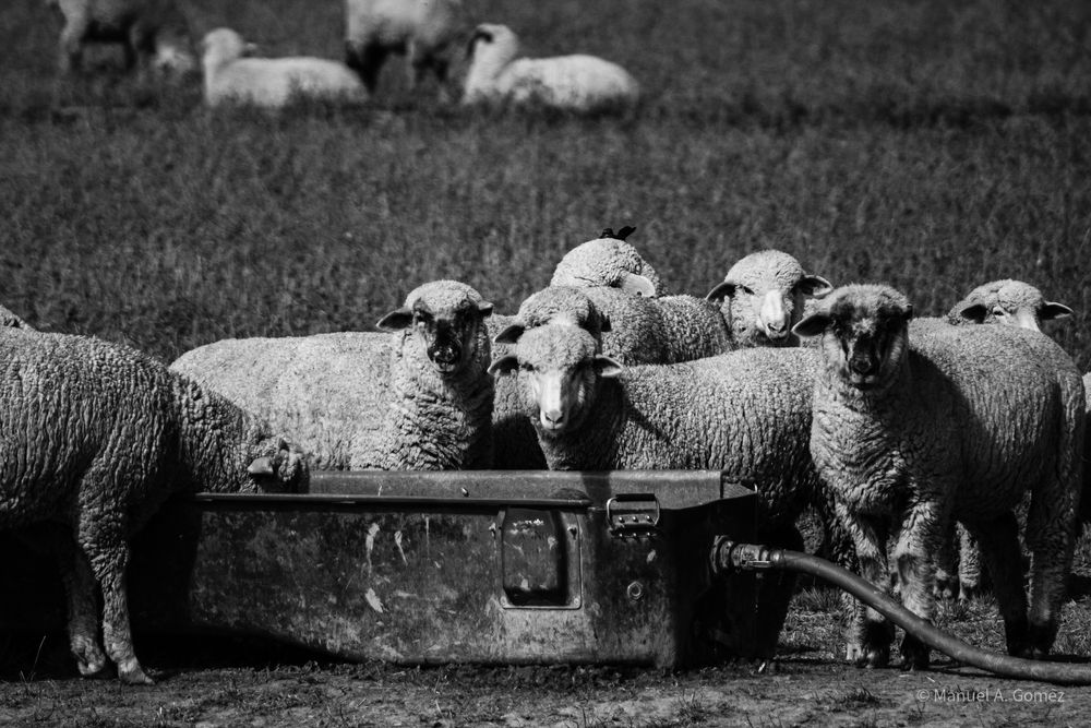Photo in Black and White #bnw #black and white #blanco y negro #animales