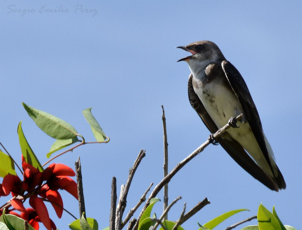 Photo in Nature #feathers #swallow #swallows #bird #birds #pájaros #golondrina #golondrinas