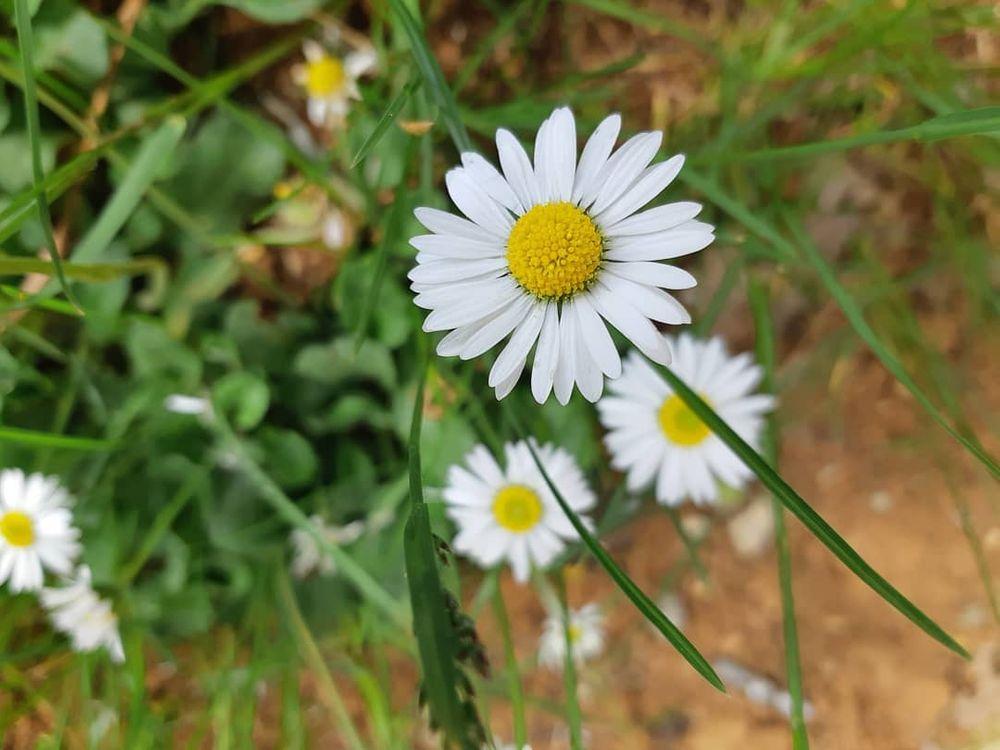 Photo in Random #flower #nature #daises #beautiful #green