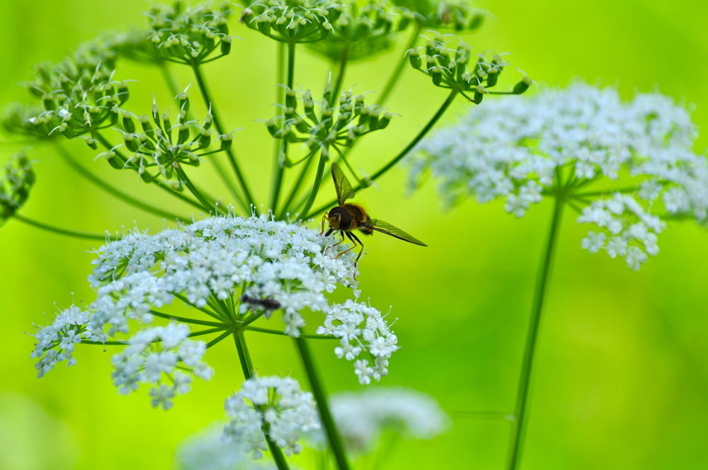 Photo in Macro #fly #flower #color