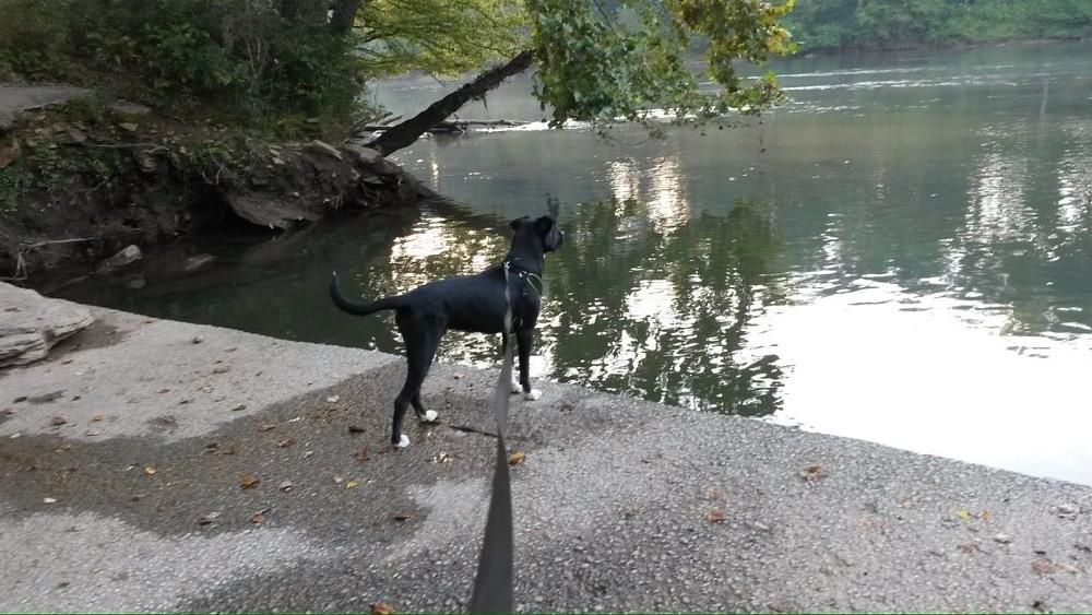 Photo in Nature #river #dog #nature