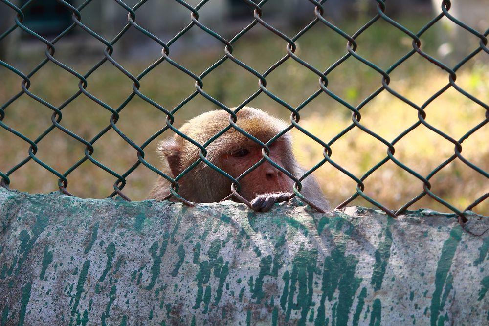 Photo in Random #pain #wild #mini zoo #travel
