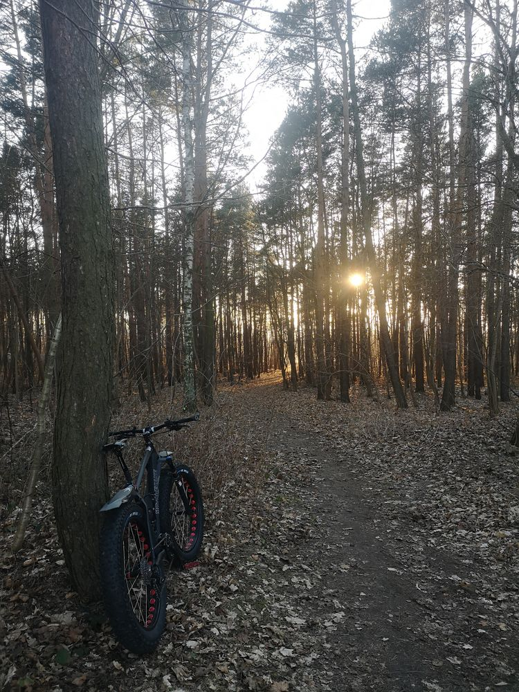 Photo in Random #fatbike #sunset #forest