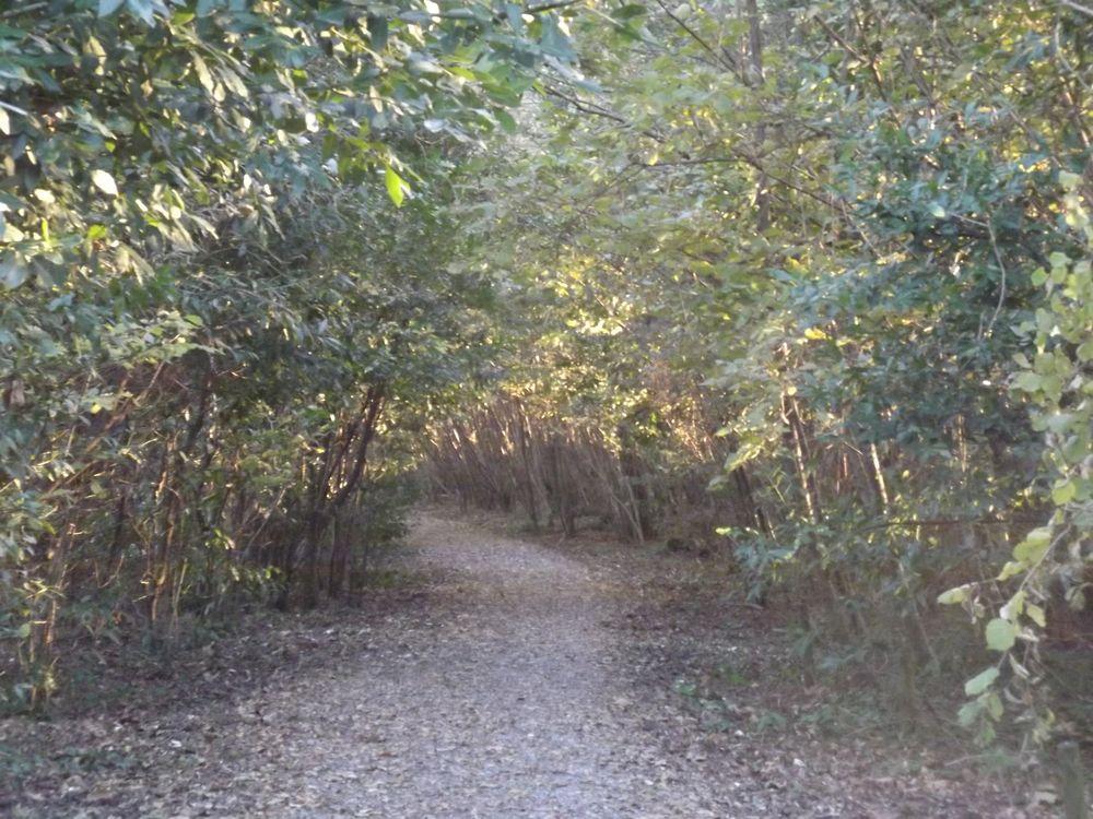 Photo in Nature #plaiaundi #irun #parque #ecologico