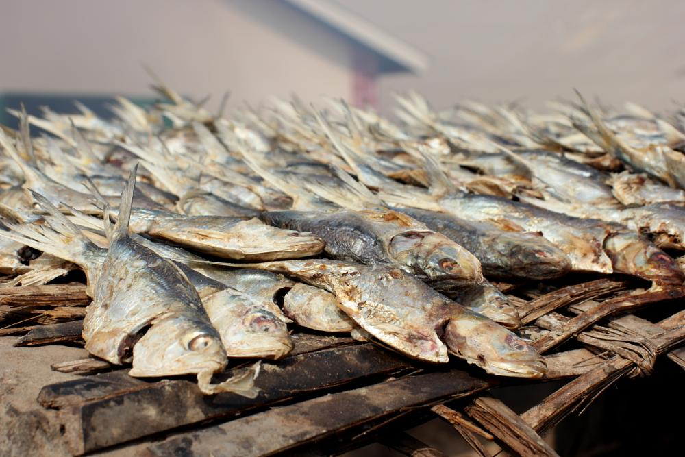 Photo in Food #fish #food #africa