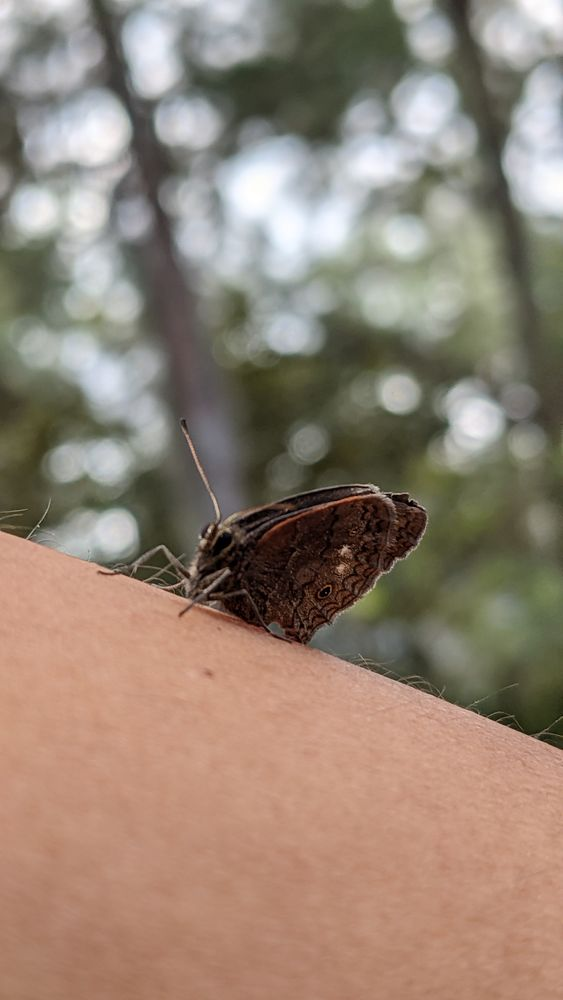 Photo in Animal #butterfly #human #nature #camping #animal #close-up #arm #vertical #skin