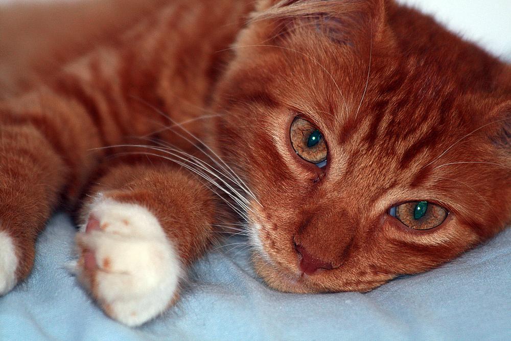 Photo in Animal #cat #pet #red