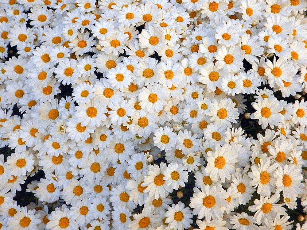 Photo in Street Photography #flowers #pattern #orange colour