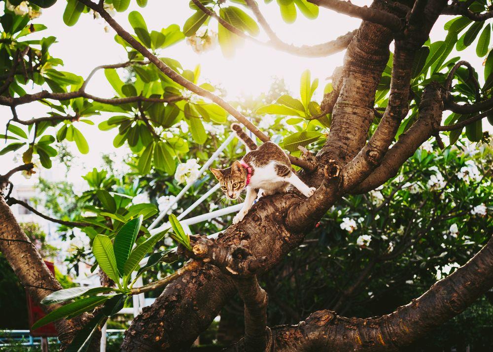 Photo in Random #cat #tree #light #green