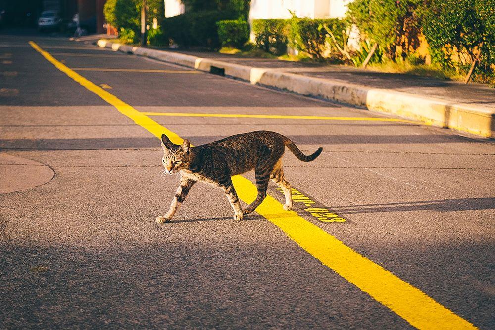 Photo in Random #cat #pet #animal #sunrise #warmth #morning #leadingline #street