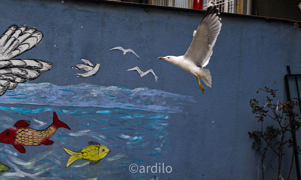 Photo in Animal #seagulls #seagull #bird #birds #nature #turkey #türkiye #naturelife #beauty #beautiful #animal #sea gull